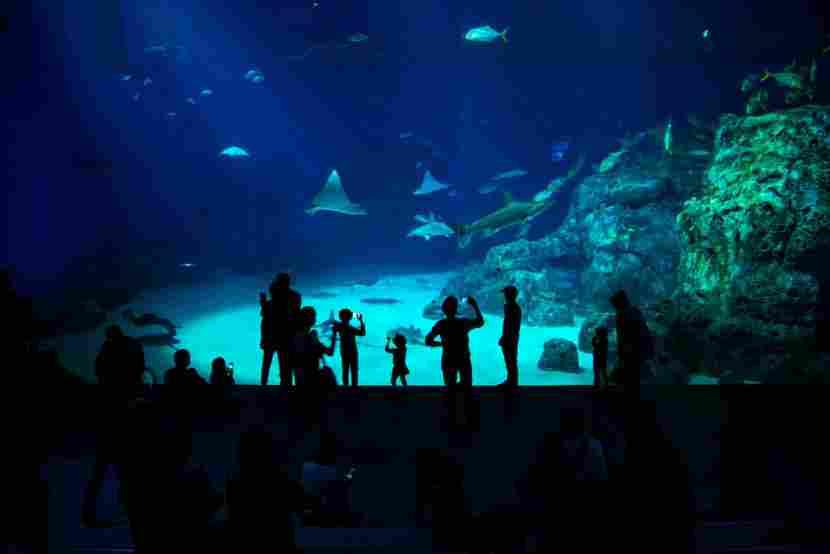 Bate-volta ao aquário de Copenhague