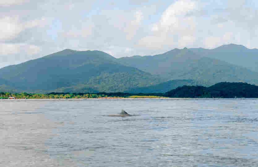 Botos do Mar Pequeno, canal entre Cananéia e Ilha do Cardoso