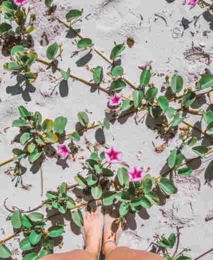Plantas rasteiras de Cananéia