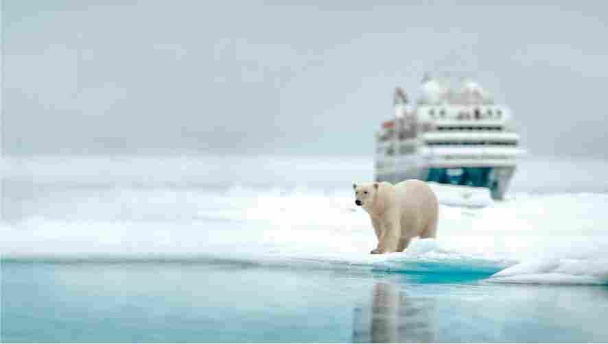 Urso Polar andando na geleira em Svalbard.